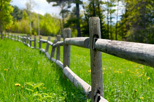 Fence and Green Grass